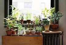 Urban gardening / Dit is nie so moeilik om plante in jou leefarea lewendig te hou nie - hier is 'n paar idees