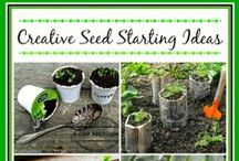 seed starting / veggie gardening - from scratch!