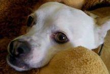 Ματιές ...  για τον σκύλο μου! /  αυτά που μου κάνουν κλικ... για τον Δια βίου σύντροφό μου!!!