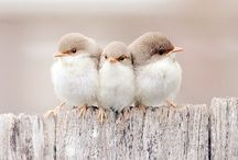 B i r d i e s / Feathered Friends / by Daisy Bel