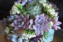 Succulents! / ... and other drought-resistant wonders