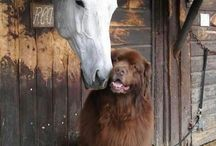For the Love of Animals / Unusual companions, unlikely unions, and the love of animals.
