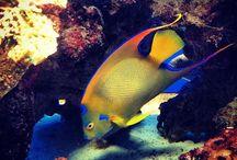 Aquariums I like / Different styles of Aquariums / by Paul Breakell
