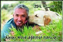 Cesar Millan Quotes Zitate / #cesarmillan #packleader #leaderofthepack #cesarsway