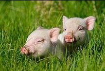 ♡ ᵒᵖᵉᶰ ᶜᵃᵍᵉˢ ᶠᵒʳ ᵇᵃᵇᵉ & ᶠʳᶤᵉᶰᵈˢ ♡ / If you can`t live vegan or vegetarien , don`t support factory farming.But at last: let`s try to live vegan.I am vegan for the life of animals.Watch out many vegan recipe boards on my side.