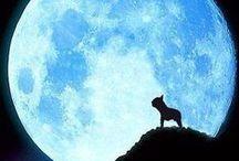 Mondsüchtig / #Vollmond #Neumond #Mond #Fullmoon #moon #mondsüchtig #Wolf #Wolfsblut