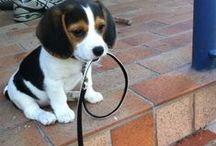 Puppies!!!!♥♥