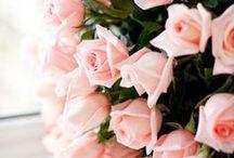 Flores / Flores, flores y más flores