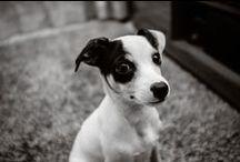 Branco - mi Perro