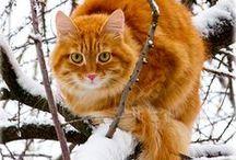 коты / коты - существа из другого мира, приходящие сюда по каким-то своим делам. обладают несомненной способностью использовать в своих целях местную флору и фауну, включая homo sapiens. впрочем - не факт, что они считают нас разумными. но зато позволяют нам украшать ими (котами) свою жизнь и среду обитания
