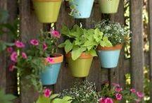 Green paradise / Plantas, macetas y huertos urbanos