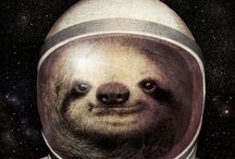 Sloths,Otters and Wombats