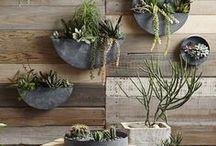 dekoracje z roślin