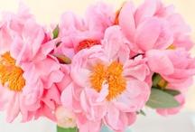 Spring /Tavasz
