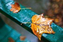 Fall into Autumn // Ősz