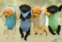 Dogs! / heehe <3