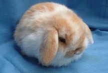 Bunnies / <3