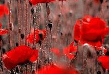 flowers / by Jasna Pleho - Studio JASNA KRASNA