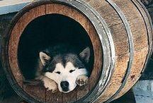 Repurposing- Wine Barrels // Újrahasznosítás- Hordók / by otthonsziget