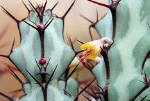 succulents / by Jasna Pleho - Studio JASNA KRASNA