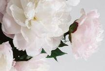 blomster / Blommor