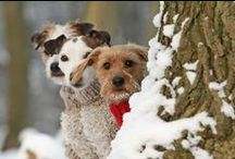 ❈~ᏇαᎥʈᎥηɠ ʄᎧɽ ᏣɦɽᎥʂʈɱαʂ~❈ / ..all the little poochie doggies waiting for Santa Paws..
