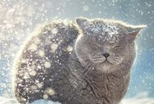 ƬᎥηƴ ƥαᏇʂ Ꭵη ᏇᎥηʈҽr ʂησᏇ☆* / ..Winter is coming for big and small, for claws and paws..