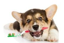 Pet Dental
