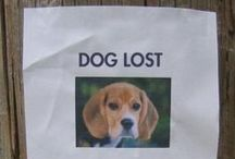 Lost & Found / Tips on keeping your pets safe and tips to find your fur kid if they become lost.