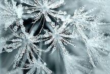 tél-winter