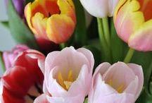 April snug & mild / Month of April, spring full of flowers