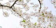 Lily Ella | Hello Spring / Hello Spring... Your Finally Here!