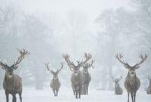 Winter Wonderland / by Alice McAvoy