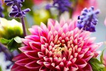Blooms / gorgeous flowers, plants and arrangements
