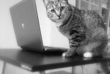 Our Favorite #StandBandits / Cats on Standing Desks or Standup Desks Cats on Hack Desks