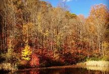Outdoor Athens / Exploring the natural beauty in and around Athens, Ohio.
