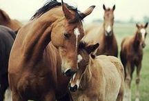 #Act4Equines / Europe must act on horse welfare