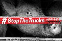 #StopTheTrucks campaign - 2016 / EACH YEAR AT LEAST 1 BILLION POULTRY AND 37 MILLION LIVE CATTLE, PIGS, SHEEP, GOATS AND EQUINES ARE TRANSPORTED OVER LONG DISTANCES WITHIN THE EU AND TO THIRD COUNTRIES.