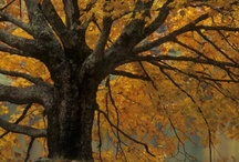 I Love Fall! / by Sandra Moyle