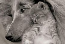 Dogs and Cats Together / It's not true...dogs and cats do love each other.