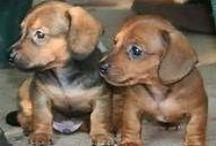 Doggie Twins
