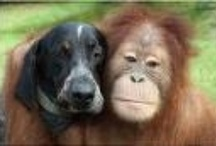 Unusual Dog Friendships