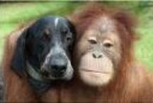 Unusual Dog Friendships