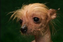 Quirky Dogs / They may not be quite conventional looking but it makes them all the more lovable.