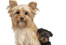 Mother Dogs and Their Pups