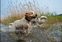 Dogs Having Fun With Water