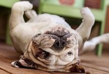 Funny Dogs / All the funny dogs