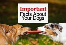 Dog Info / Important facts about your dogs