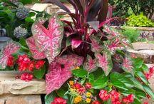 jardinagem / Sugestões para jardinscantos e salas