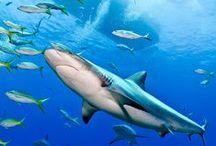 Under Da Sea.... :-)